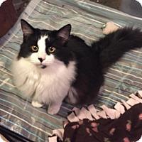 Adopt A Pet :: FernandoCP - Carlisle, PA