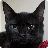 Adopt A Pet :: Paige - Redwood City, CA