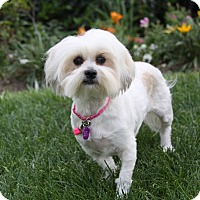 Adopt A Pet :: MADILYN - Newport Beach, CA