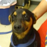 Adopt A Pet :: Bindi - Gulfport, MS