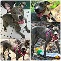 Adopt A Pet :: Dylan - Forked River, NJ