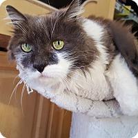 Adopt A Pet :: Sammy - Sherman Oaks, CA