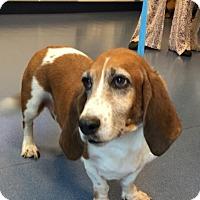 Adopt A Pet :: Hunter - Jupiter, FL