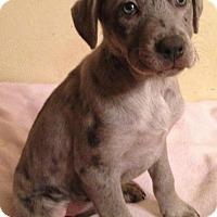 Adopt A Pet :: Misty - Boston, MA