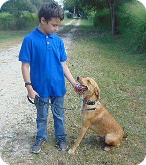 Labrador Retriever/Weimaraner Mix Dog for adoption in Seattle, Washington - Pal