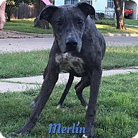Adopt A Pet :: Merlin - Cheney, KS