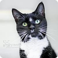 Adopt A Pet :: Patchwork - Reisterstown, MD