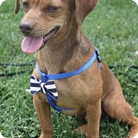 Adopt A Pet :: Wayland - Macomb, IL