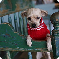 Adopt A Pet :: Noelle - San Antonio, TX