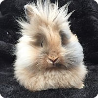 Adopt A Pet :: Posy - Watauga, TX