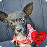 Adopt A Pet :: Tiny Tim - San Leon, TX