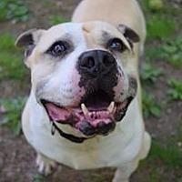 Adopt A Pet :: KC - Ozone Park, NY