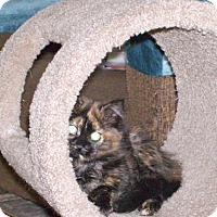 Adopt A Pet :: Amber (Turtle) - Toronto, ON