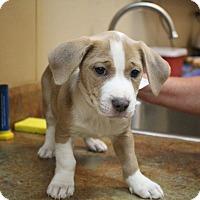 Adopt A Pet :: Peaches & Cream - Glastonbury, CT
