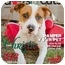 Photo 1 - Boxer/Pointer Mix Dog for adoption in Houston, Texas - Christie