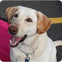 Adopt A Pet :: Topaz - Cumming, GA