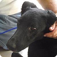 Adopt A Pet :: Wilma - Birmingham, AL