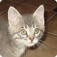Adopt A Pet :: JACK - 2013 - Hamilton, NJ