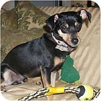 Adopt A Pet :: HENRI - Springvale, ME