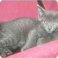 Adopt A Pet :: kittens - Etobicoke, ON