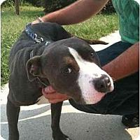 Adopt A Pet :: Zeke - Reisterstown, MD