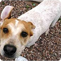 Adopt A Pet :: Sid **ADOPTION PENDING** - Phoenix, AZ