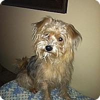 Adopt A Pet :: MSU Winston - Phoenix, AZ