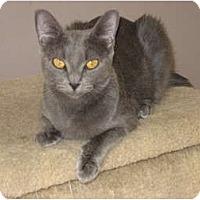 Adopt A Pet :: Bella - Huffman, TX