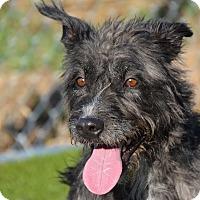 Adopt A Pet :: Lynn - Meridian, ID