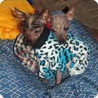Adopt A Pet :: Calvin & Hobbs (NJ) - Gilford, NH