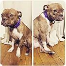 Adopt A Pet :: Buffy *Courtesy Post*