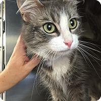 Adopt A Pet :: Snow White - East Brunswick, NJ