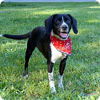 Adopt A Pet :: Shella - Mocksville, NC