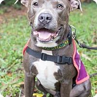 Adopt A Pet :: Boris - Snellville, GA
