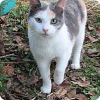 Adopt A Pet :: Faith - Armuchee, GA