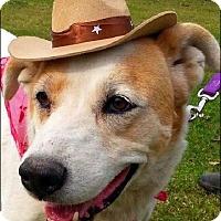 Adopt A Pet :: Riley - Simsbury, CT