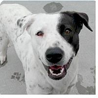 Adopt A Pet :: Lovito - Springdale, AR