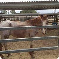 Adopt A Pet :: A1024745 - Bakersfield, CA