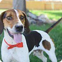 Adopt A Pet :: Weston - Salt Lake City, UT