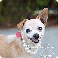 Adopt A Pet :: Tootsie and Mini - Los Angeles, CA