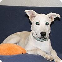 Adopt A Pet :: Willow - Avon, NY