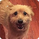 Adopt A Pet :: Rusty  *Needs Foster*