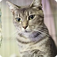 Adopt A Pet :: Susan - Winston-Salem, NC