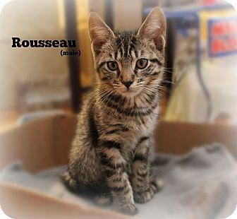 Domestic Shorthair Kitten for adoption in Glen Mills, Pennsylvania - Rousseau