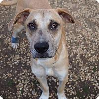 Adopt A Pet :: Slim Pick - Philadelphia, PA