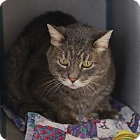 Adopt A Pet :: Rocco - Gardnerville, NV