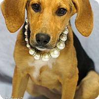 Adopt A Pet :: Tiffany - Newnan City, GA