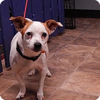 Adopt A Pet :: April - Lafayette, IN