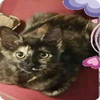 Adopt A Pet :: A415971 - San Antonio, TX