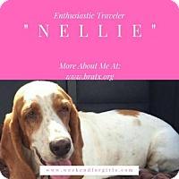 Adopt A Pet :: Nellie - Carrollton, TX